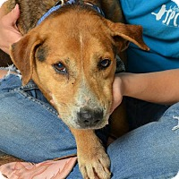 Adopt A Pet :: Doe - In Foster - Marrero, LA
