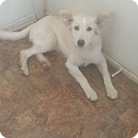 Adopt A Pet :: Willow - Flemington, NJ