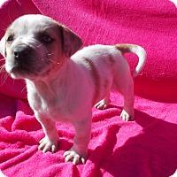 Adopt A Pet :: SHANE - Savage, MD