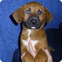 Adopt A Pet :: Aztec - Oviedo, FL