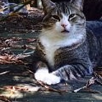 Adopt A Pet :: Timmy - Bonita Springs, FL