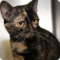 Adopt A Pet :: Nell - Marietta, OH