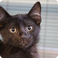 Adopt A Pet :: Dennis - Sarasota, FL