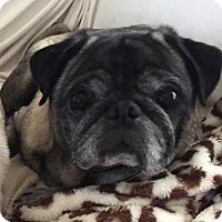 Adopt A Pet :: Obie - Atlanta, GA