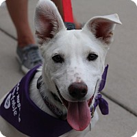 Adopt A Pet :: Merryweather - Littleton, CO