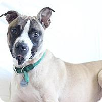 Adopt A Pet :: Robbie - Bradenton, FL