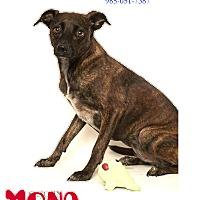 Adopt A Pet :: Mona - Laplace, LA
