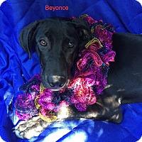 Adopt A Pet :: Beyonce meet me 10/28 - Manchester, CT