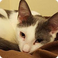 Adopt A Pet :: Xanti - Grayslake, IL