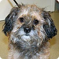 Adopt A Pet :: Danny - Wildomar, CA