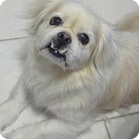 Adopt A Pet :: Sammie W. Pepe - Santa Fe, TX