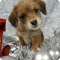 Adopt A Pet :: Faith - Champaign, IL