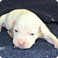 Adopt A Pet :: Lager - Yreka, CA