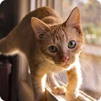 Adopt A Pet :: Nutter Butter - Warner Robins, GA