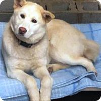 Adopt A Pet :: I'M ADOPTED Meeko Wolfe - Oswego, IL
