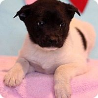Adopt A Pet :: Marvin - Waldorf, MD