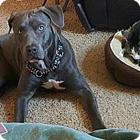 Adopt A Pet :: Bane - Dayton, OH