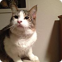 Adopt A Pet :: Garth - Mr. Mellow - East Hanover, NJ