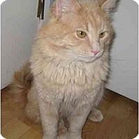 Adopt A Pet :: Murphy - San Ramon, CA