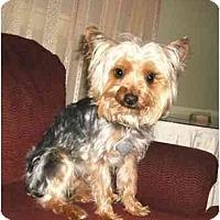 Adopt A Pet :: Levi - Mooy, AL