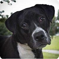 Adopt A Pet :: MJ - kennebunkport, ME