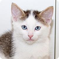 Adopt A Pet :: Tucker - Irvine, CA
