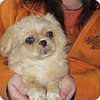 Adopt A Pet :: Fred Weasley - Salem, NH