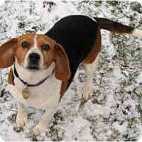 Adopt A Pet :: Babette - Novi, MI