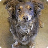 Adopt A Pet :: Katie - Wickenburg, AZ