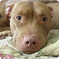 Adopt A Pet :: Karma - Reisterstown, MD