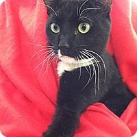 Adopt A Pet :: Prince - Whitestone, NY