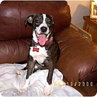 Adopt A Pet :: LuLu Belle - Scottsdale, AZ