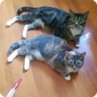 Adopt A Pet :: Princess Rotsey - Vancouver, BC