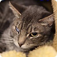Adopt A Pet :: Serah - Gilbert, AZ