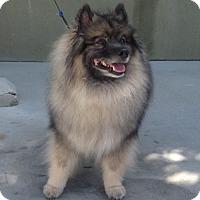 Adopt A Pet :: NALA - Southern California, CA