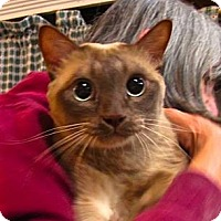 Adopt A Pet :: Sassafras - Davis, CA