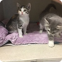 Adopt A Pet :: VALERIE - Hamilton, NJ