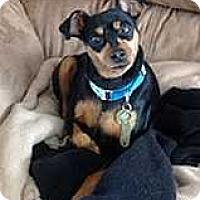 Adopt A Pet :: Irene - Columbus, OH