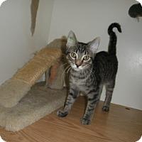 Adopt A Pet :: Baja - Milwaukee, WI