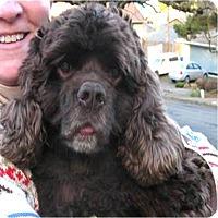 Adopt A Pet :: Petey - Salem, OR
