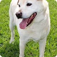 Adopt A Pet :: Harley - Myakka City, FL