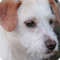 Adopt A Pet :: Paul - Germantown, MD