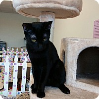 Adopt A Pet :: Salem - Maryville, TN