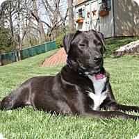 Adopt A Pet :: Rambo-so sweet! - Philadelphia, PA