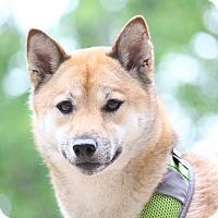 Adopt A Pet :: Kirie - Manassas, VA