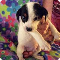 Adopt A Pet :: Angelo - Buffalo, NY