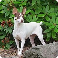 Adopt A Pet :: Rediviva (WA) - Seattle, WA