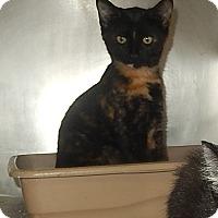 Adopt A Pet :: Abby Cadabby - Newport, NC