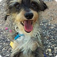 Adopt A Pet :: Mayday - Mesa, AZ