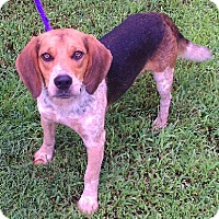 Adopt A Pet :: Tucker - Aurora, IL